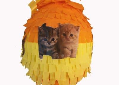Пинята с котета, Цена 40лв