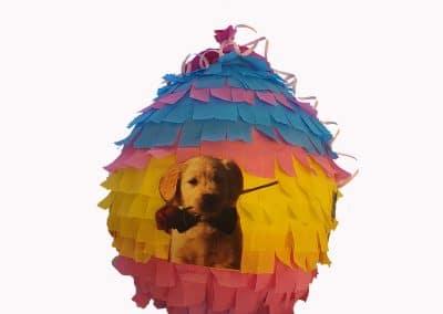Пинята с куче, Цена 40лв.